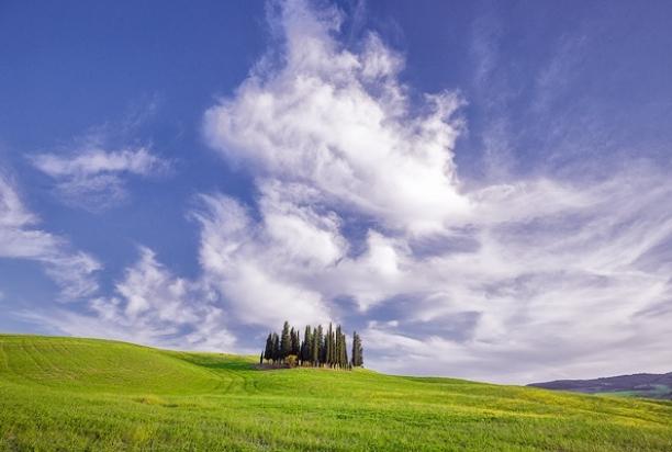 cypresses_Tuscany_Italy
