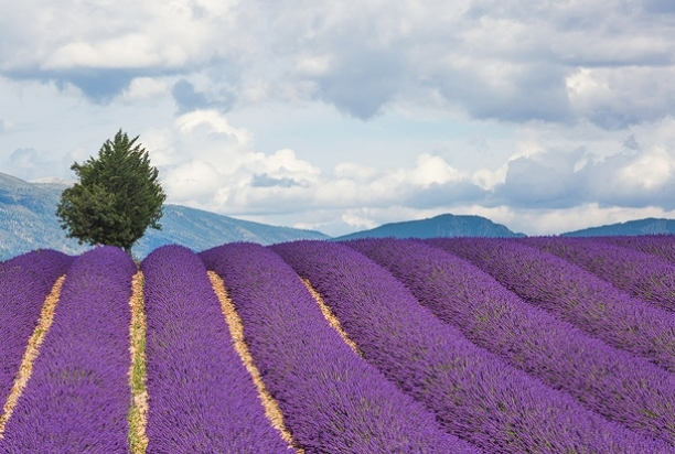 Provence-1047