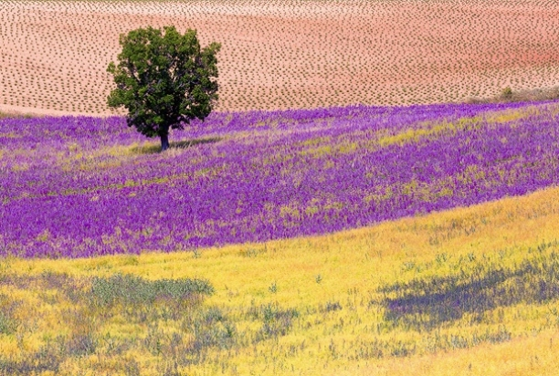Provence-846