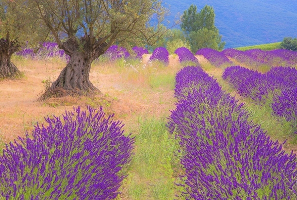 Provence-847