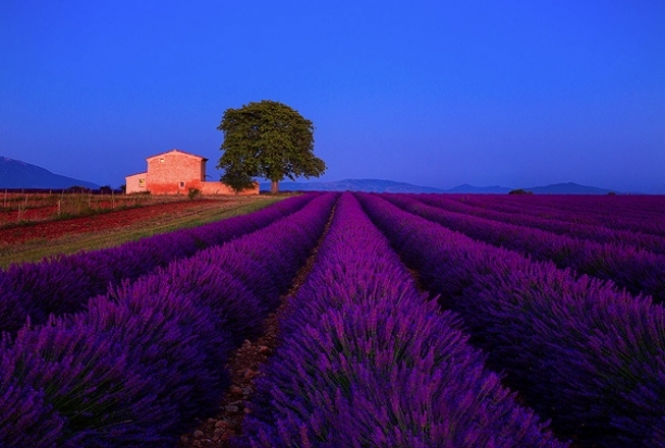Provence-985