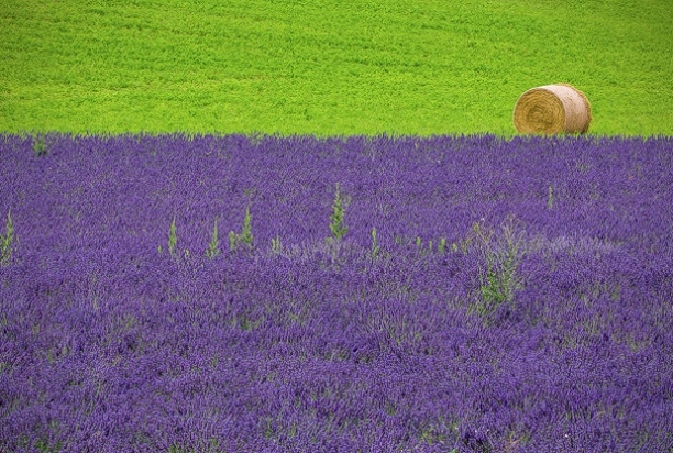 Provence-995