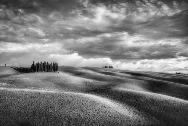 Cypress_Grove_Tuscany_Italy