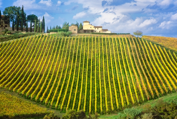 vine_farmhouse_chianti_italy