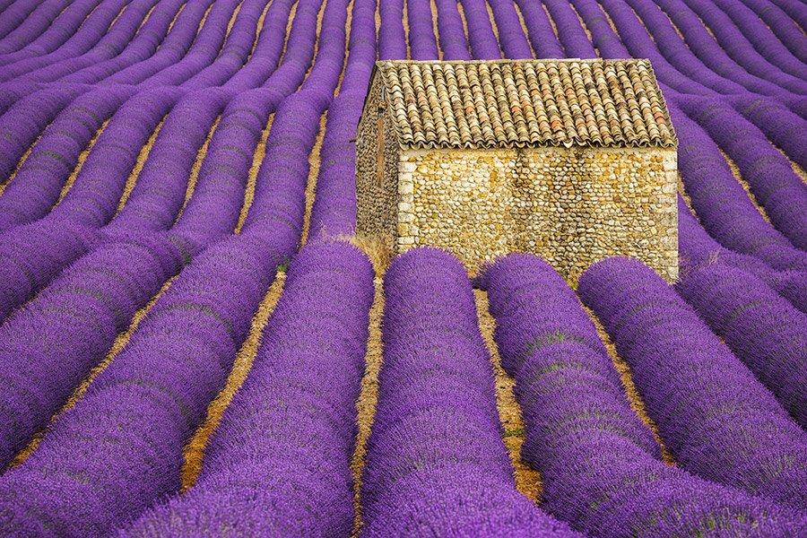 lavender-valensole-provence