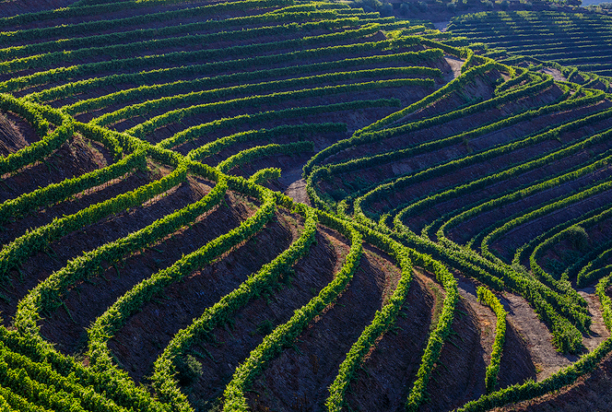 Wine terraces douro valley, portugal photo tour