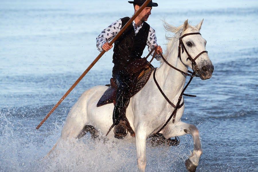 A Camargue cowboy, called a Gardian, riding through the surf on his white horse.