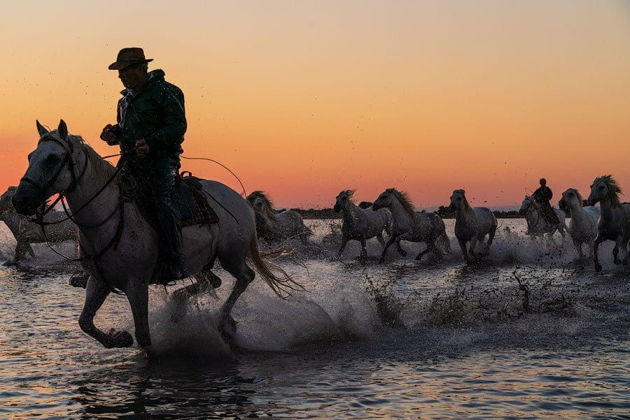 Sunset in the Camargue as the Guardians herd their white horses back to the stables.