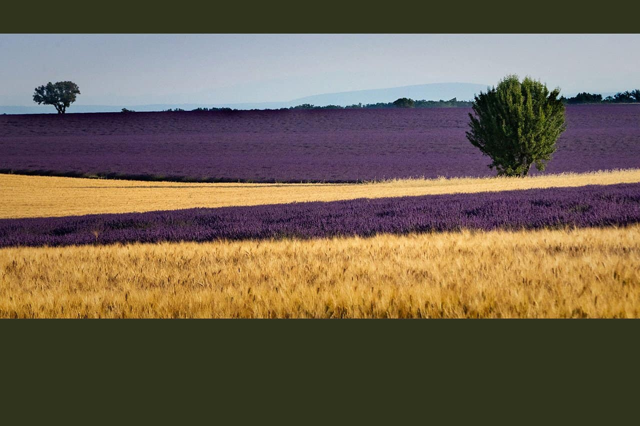 France_Provence_wheat-&-lavender_pano_2018