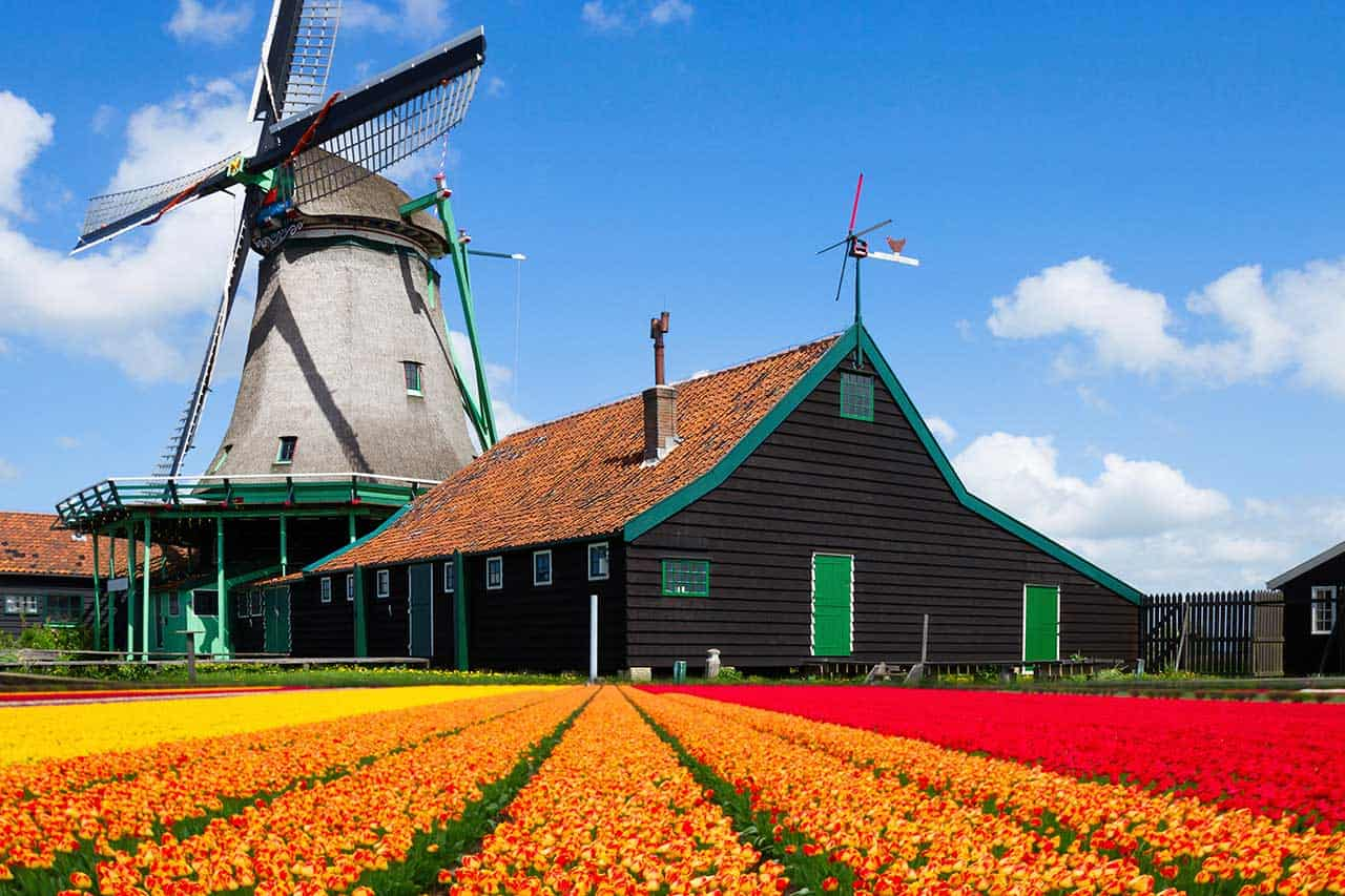 Netherlands_windmill-with-tulips_1