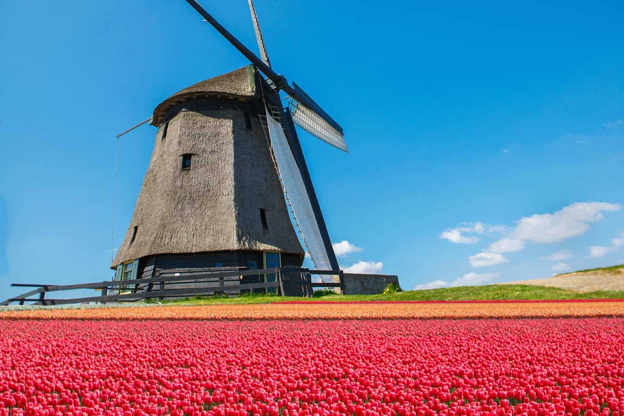 Netherlands_windmill-with-tulips_2