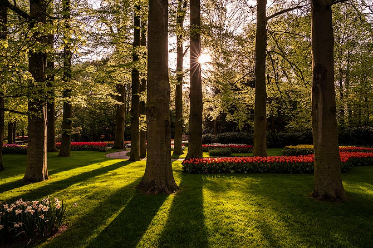 Keukenhof_Gardens_Netherlands